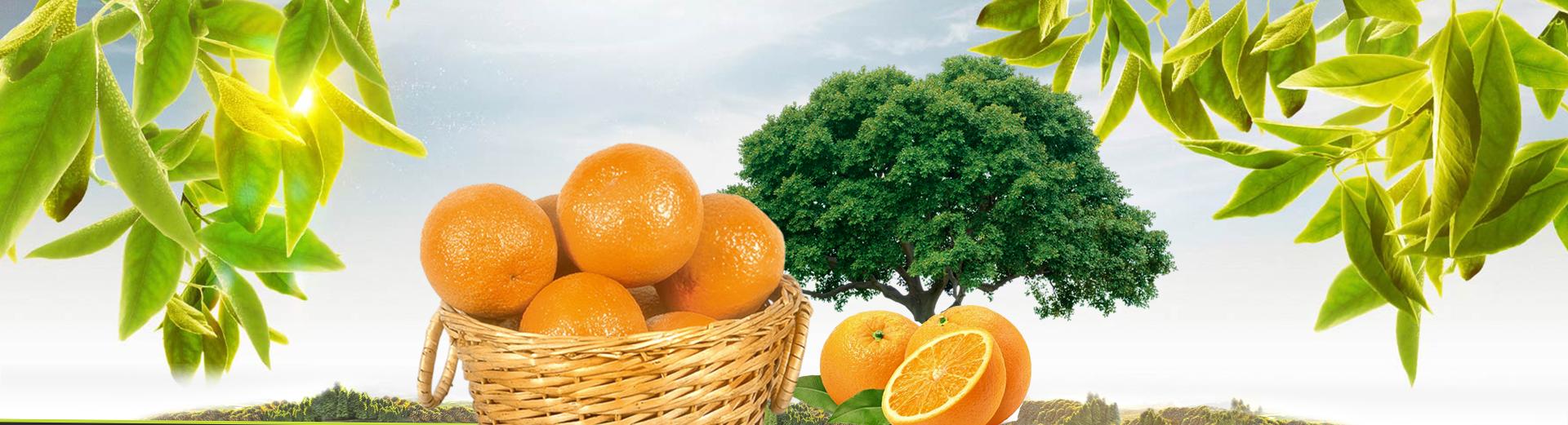 mandarine-slide